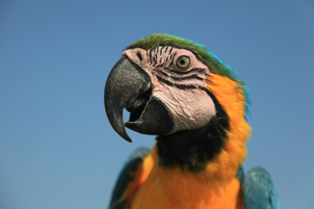 Thomas Slatin's Beloved Macaw Picture On iStock By Getty Images