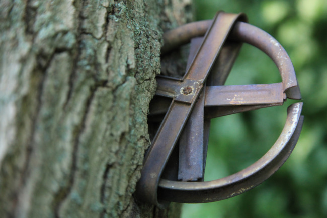 Clothesline Pulley In Tree
