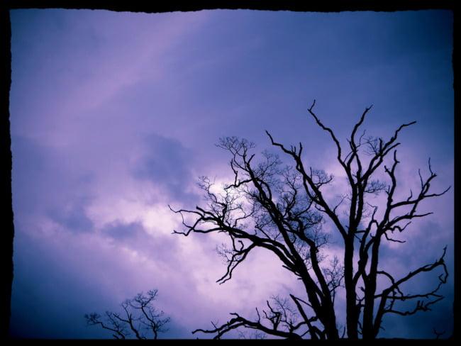 Dead Tree (Alternate Take)