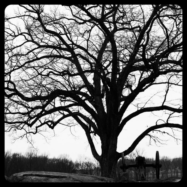 Devil's Den Tree (Concorde Edit)