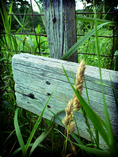 Fencing Planks