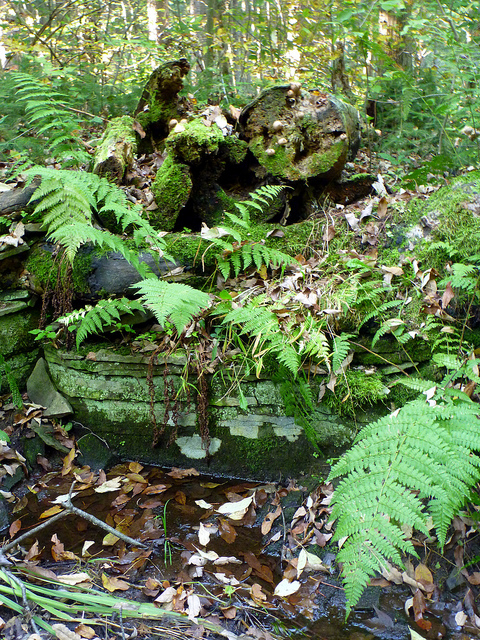 Ferns And Logs