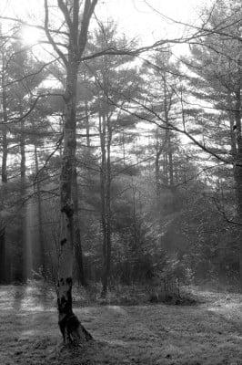 Forest Sunrise (1)