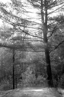 Forest Sunrise (2)