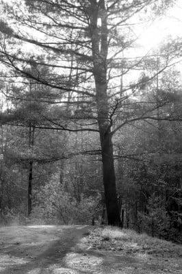 Forest Sunrise (3)