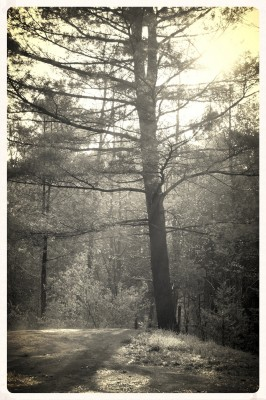 Forest Sunrise (3) (Edit)