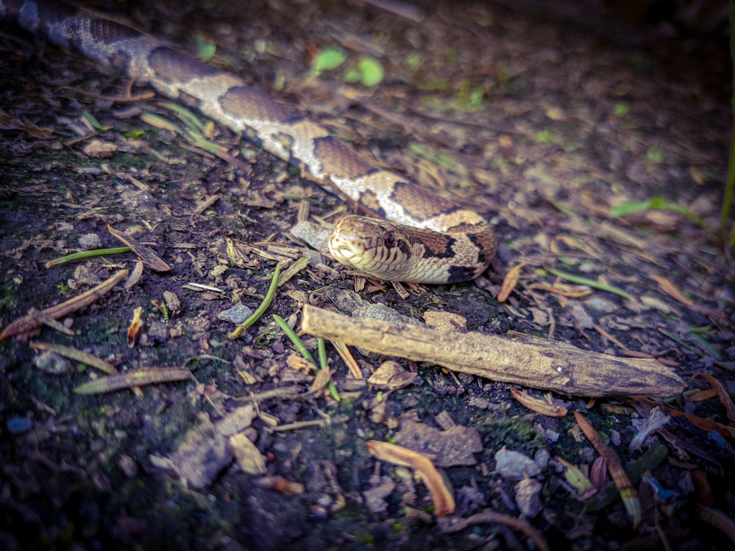 Garden Snake