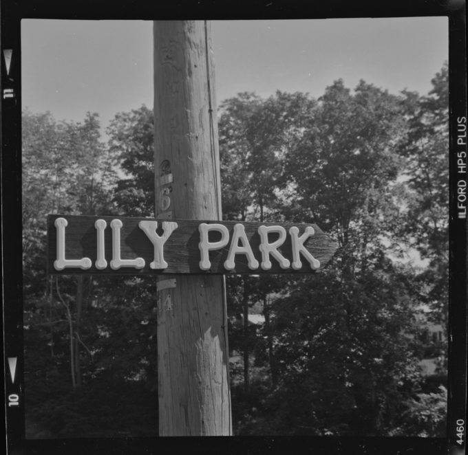 Lily Park (Redux)