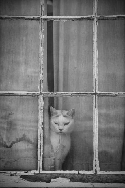 Peeking Kitty