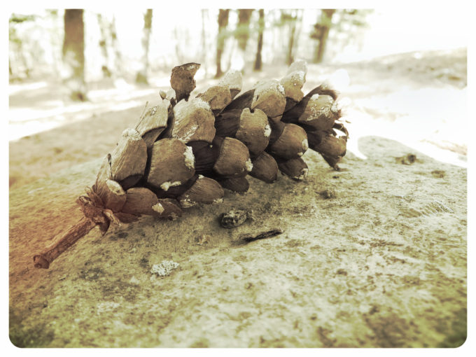Pine Cone (Vintage Grunge Edit)