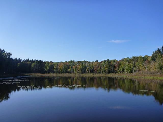 Sara Lib State Forest Pond