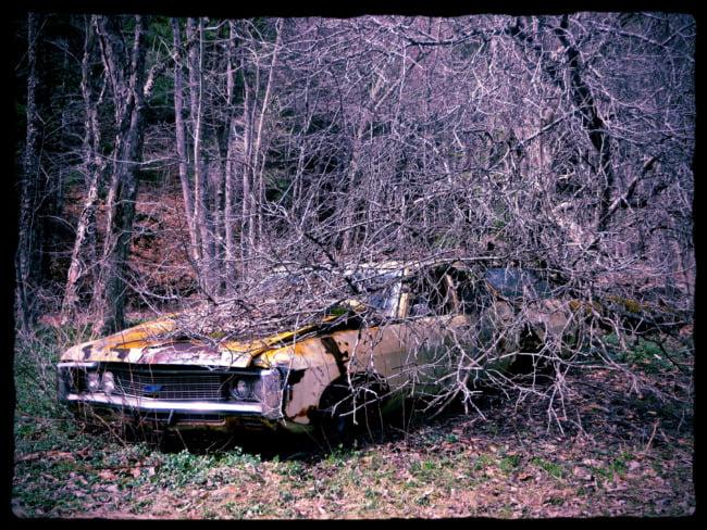 Tree Hits Car