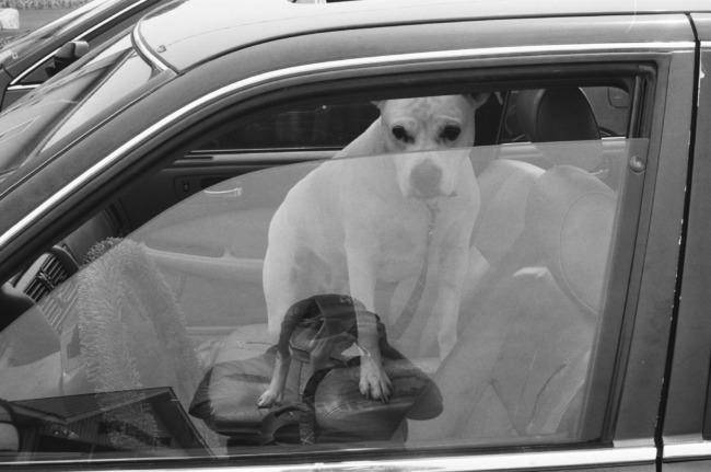 A Dog In A Car In A Parking Lot