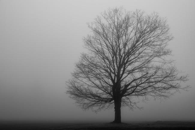 Alone In A Heavy Fog
