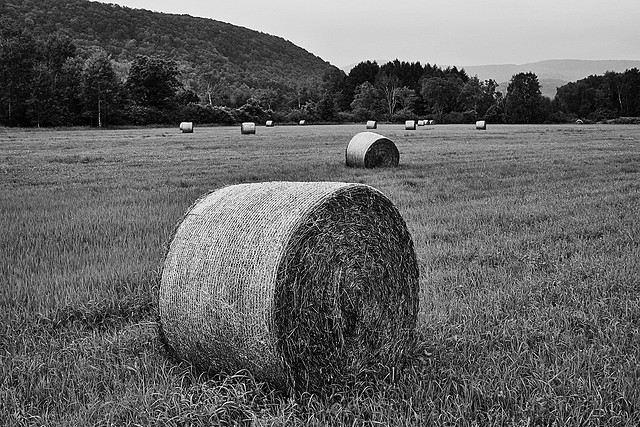 Big Field Of Round Bales