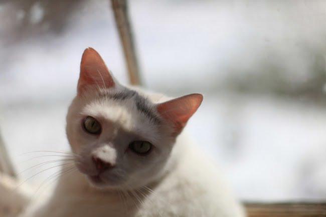Cat In A Sunny Window