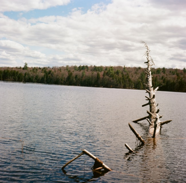 Dead Tree In The Lake