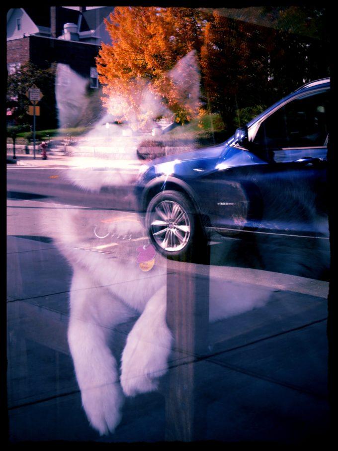 Dog In A Barbershop Window