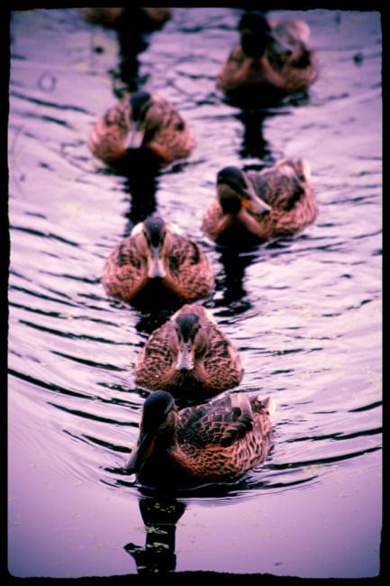 Get Your Ducks In Order (Old School Edit)