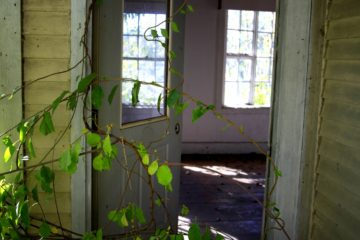 letting-nature-inside