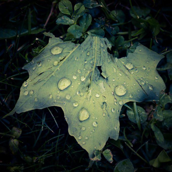 Little Drops Of Rain