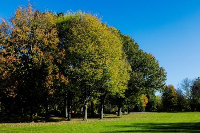 Otsinigo Park